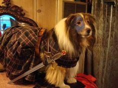 Braveheart Halloween costume idea