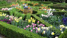 Dal 1 al 30 aprile, festeggia anche tu i celebri fiori simbolo dei Paesi Bassi durante il Festival dei Tulipani di Amsterdam.
