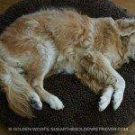 Il+cane+andava+a+dormire+a+casa+di+una+sconosciuta,scoprite+perchè