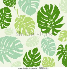 Green Monstera tropical leaf Pattern. Vector