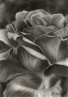 charcoal drawings of flowers - Google Search