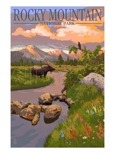 Moose and Meadow - Rocky Mountain National Park Prints by Lantern Press at AllPosters.com