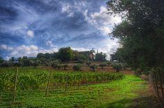 A beautiful view from the vineyard Una bonita vista desde la viña #granhotelsonnet #mallorca #travel
