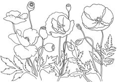 Remembrance Day Poppies Coloring Page