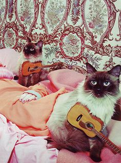 ukelele kitties thanks @Monique Pouget