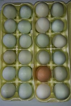 Chicken eggs from our local farmer!