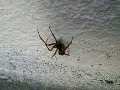 A spider climbing into my house!