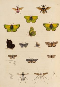 Insects of northern Canada by Anonymous - print