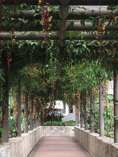 Hanging flowers, Antigua Guatemala, Guatemala