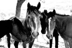 Wild Horses Black and White Signed by LogeePhotography on Etsy, $16.00
