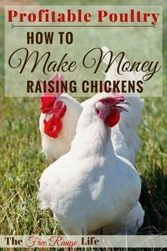 Chickens are a hard-working homestead staple. Learn 7 ways to make money raising chickens and increase your homestead income and have a profitable flock. Raising Backyard Chickens, Keeping Chickens, Pet Chickens, Backyard Farming, Chicken Coop Plans, Building A Chicken Coop, Chicken Coops, Raising Goats, Galo
