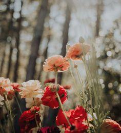 Frühling Wallpaper, Flower Iphone Wallpaper, Spring Wallpaper, Aesthetic Iphone Wallpaper, Wallpaper Backgrounds, Aesthetic Wallpapers, Wallpaper Nature Flowers, Beautiful Nature Wallpaper, Spring Aesthetic