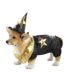 Halloween Costumes for Pets: Woof Wizard Dog Costume Rastedt for David Pet Halloween Costumes, Pet Costumes, Chihuahua Puppies, Corgi Dog, Pet Insurance Reviews, Funny Animals, Cute Animals, Funny Pets, Wizard Costume