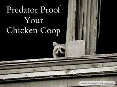 Predator Proof Chicken Coops @ Farming My Backyard: