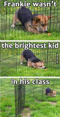 Dump a day Attack of the Funny Animals 50 Funny Animal Pictures Cute Animal Memes, Funny Animal Quotes, Animal Jokes, Funny Animal Pictures, Cute Funny Animals, Cute Baby Animals, Funny Cute, Dog Pictures, Funny Images