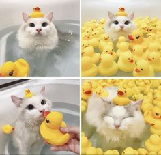 Positive things - Using a bathtub – beautiful cutest funny , animals , animals videos , animals cute , cute animals Cute Little Animals, Cute Funny Animals, Funny Cute, Funny Animal Memes, Cat Memes, Duck Memes, I Love Cats, Crazy Cats, Animals And Pets