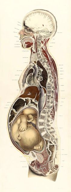 ARTEFACTS - antique images: Woman textbook medical illustration — for personal...