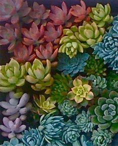 30 SUCCULENT CUTTINGS, Larger rosettes, Colorful, yellow, pink, purple, blue, green.... on Etsy, $48.50