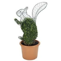 topiary squirrel frame