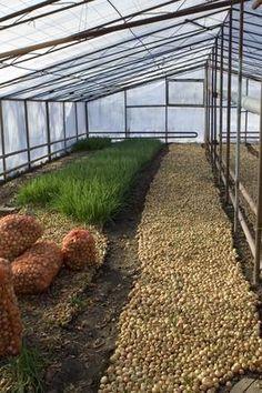 How to Design a Garden Greenhouse