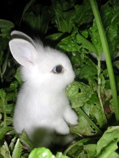 Think of bunnies as cute garden pets!