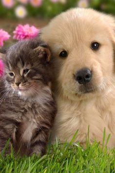30 Best Dogs Cats Together Images Pets Dog Cat Cut Animals