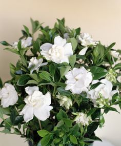 Care level: Expert There's nothing quite like the intoxicating scent of gardenia flowers, but special attention is required to get blooms to appear. It needs 6-8 hours of direct bright sunlight (and growing lights won't do) and, ideally, a humidifier.   - HouseBeautiful.com