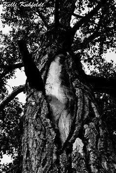 Torn Tree (photography,black and white,nature,tree,amazing,creative,art,digital art,inspiration)