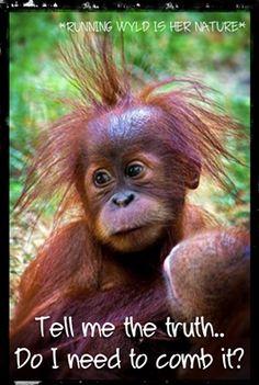 'It is okay for me to have a bad hair day - it is called cute' - Baby Orangutan Primates, Mammals, Cute Creatures, Beautiful Creatures, Animals Beautiful, Cute Baby Animals, Animals And Pets, Funny Animals, Animal Pictures