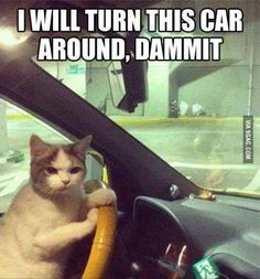 Road trips with my cat
