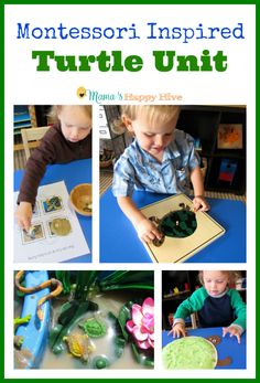 A fun Montessori Inspired Turtle Unit study for toddlers and preschoolers. This unit includes language work, sensory play, fine motor skills, life cycle, and number recognition. - www.mamashappyhive.com