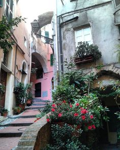 Best part of working in the weekend #sanremo #oldtown #liguria #ig_liguria #weekend #work #visiting #roses #city #beautiful #pictoftheday #followgram #followme #instamood #sunny #tourist #sunday #january #happy #love #fun #igers #hot #exploring #italy