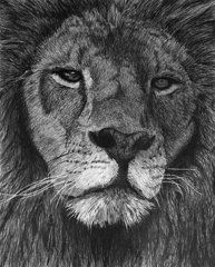 Graphite Drawings - Lion of Judah  by Bobby Shaw