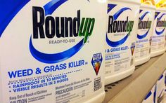 "Well I am glad SOMEONE IN CHARGE has some sense.  ~Sandy Fox (wishing the US would do the same with these deadly products.)  Monsanto's ""Roundup"""