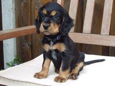 Puppy Gaia