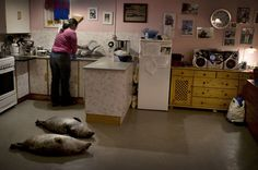 Andrea Gjestvang, from Disappearing Ice Age (Greenland) House Inside, Ice Age, Photojournalism, Climate Change, The Incredibles, Photography, Kitchens, Houses, Dreams