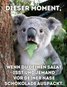 """Dürfte doch für einen Koala-Bär kein Problem sein. Wie heißt es doch im Radio: MIT PFEFFERMINZ BIN ICH DER GRÖSSTE...!"""""""