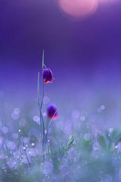 Photographer\s photo Сергій Марков - Холодный рассвет