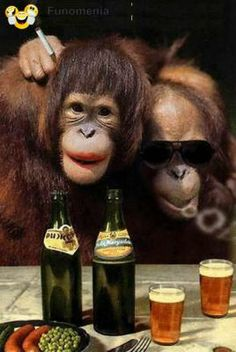 """Image result for funny drunk chimpanzee"""""""