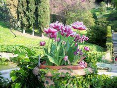 Tivoli Gardens-- Italy