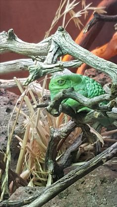 Aquarium Photos, Hiking Boots, Animals, Animales, Animaux, Animal, Animais