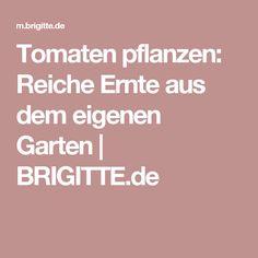Tomaten pflanzen: Reiche Ernte aus dem eigenen Garten | BRIGITTE.de