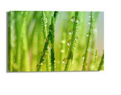Leinwandbild Regentropfen auf Grashalm Wandbilder Leinwandbilder