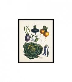 French Vegetable Print No. 21