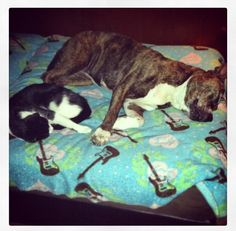 Best Buddies! #Pitbull #Dog #Smallz #Oreo #Cat #MyKids #ProudOwner