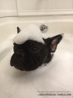 Mr. Bubble works perfectly on Mr. Frenchie