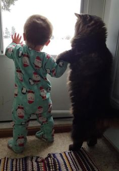 "Maine Coon Cat Guards His Baby Sister for Life! ""Take my paw, little human!"""