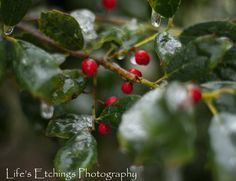 Iced Berries - 8x10 Nature Shot. $25.00, via Etsy.