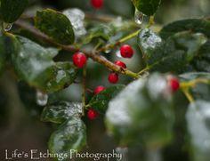 Iced Berries - 8x10 Nature Shot. $25.00, via Etsy.