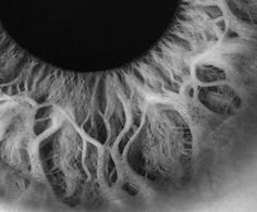 eye detail.  Like trees.